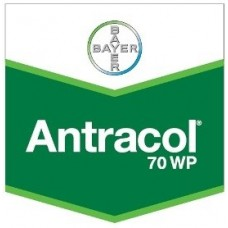 ANTRACOL 70 WP 0,5KG